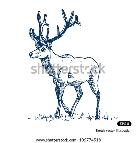 Deer. Hand drawn sketch illustration isolated on white background - stock vector