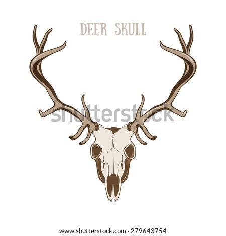 deer skull stock images, royalty-free images & vectors   shutterstock