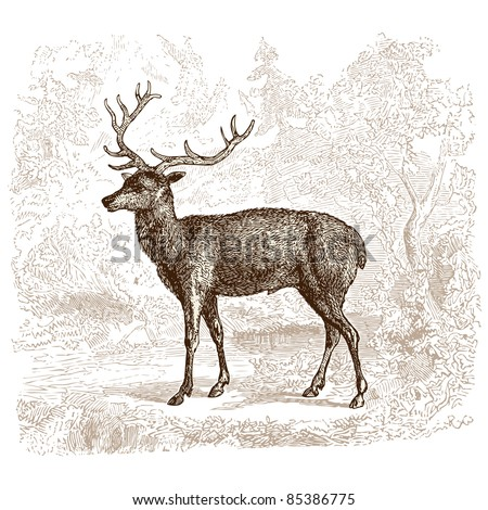 "Deer - vintage engraved illustration - ""Histoire naturelle"" by Buffon and Lacépède published in 1881 France - stock vector"