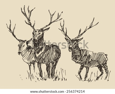 Deers engraving style, vintage illustration, hand drawn, sketch - stock vector