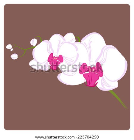 delicate orchid branch for your greeting cards on light background - stock vector