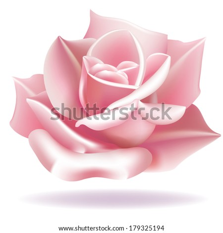 Delicate Rose. Rose flower on a white background. Realistic flower vector. Vector file is EPS8, all elements are with gradient meshes. - stock vector