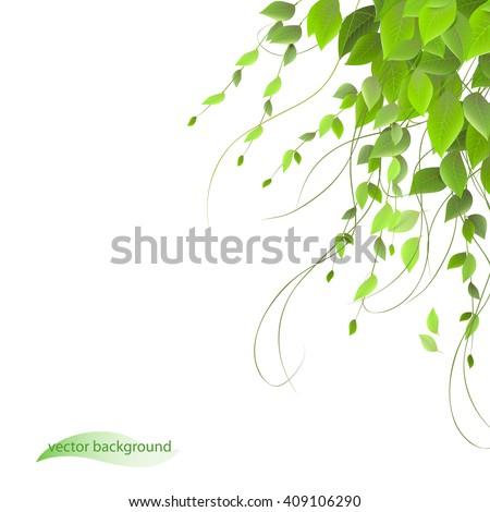 dense foliage on a white background climbing plants vector - Climbing Plants