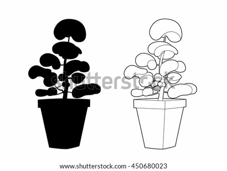 Design and shade of a shrub in a pot
