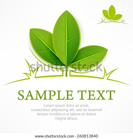 Design elements, branch with green leaves & text, vector illustration - stock vector