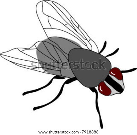 Detailed black, gray (and maroon) fly - insect