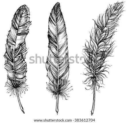 Detailed feathers isolated - stock vector