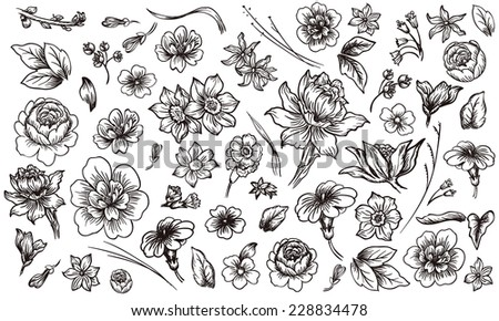 Detailed hand drawn flower and leaf set - stock vector