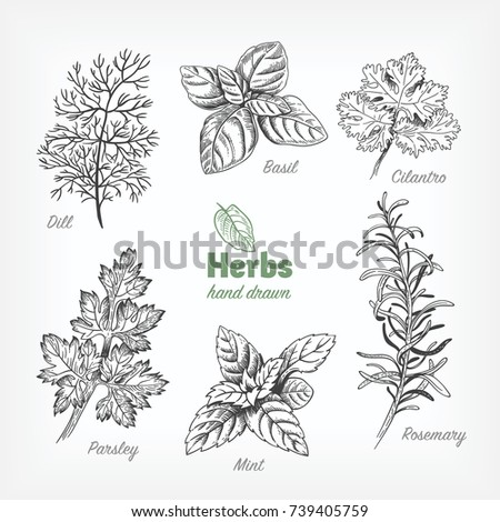 herbs coloring pages - photo#7