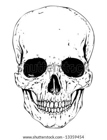 detailed human skull vector - stock vector