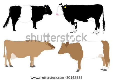 Detailed series of illustrated cows - stock vector