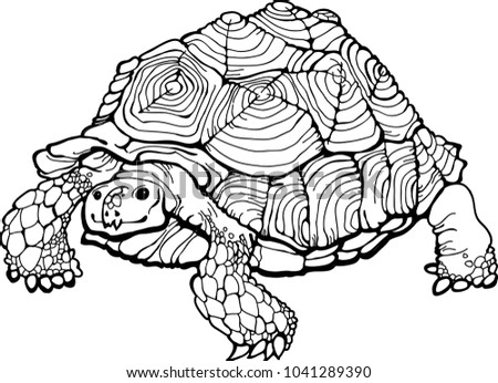 Detailed Turtle Coloring Page Coloring Book Stock Vector 1041289390