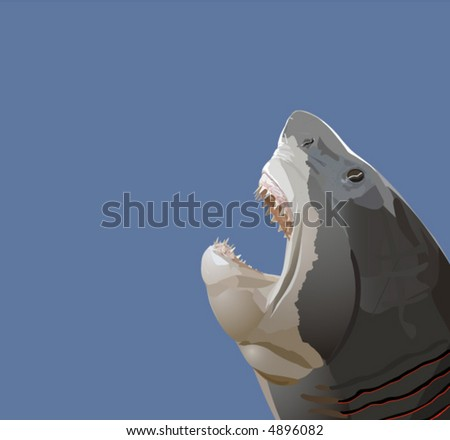 Detailed vector illustration of a shark head with open mouth with teeth.