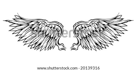 detailed vector wing - stock vector