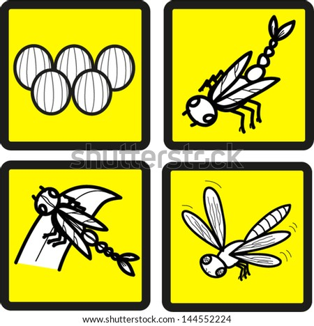 Development of a dragonfly. - stock vector