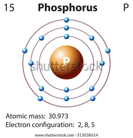 Diagram representation of the element phosphorus illustration - stock vector