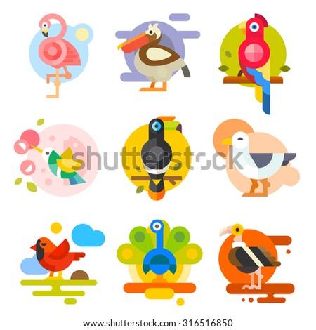 Different birds: pelican, flamingo, toucan, parrot, hummingbird, eagle, seagull, peacock. Vector flat Illustrations  - stock vector