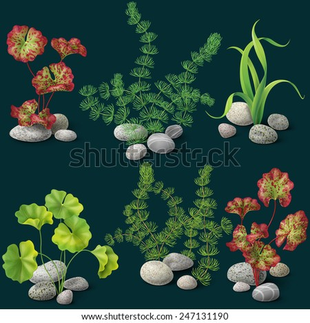 Different kinds of algae and pebbles set on dark background. - stock vector