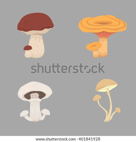 different kinds of mushrooms. set mushroom vector illustration - stock vector