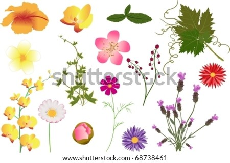 Different kinds of vector flowers and leaves - stock vector