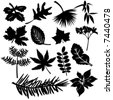 Different Leafs - Vector Illustration - stock vector