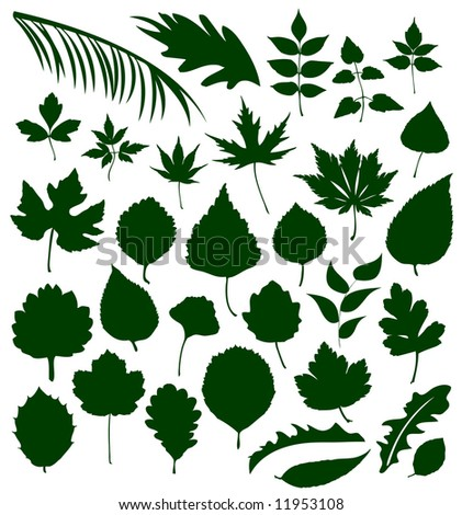 Different Leafs - Vector Silhouettes