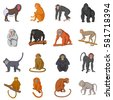 different monkeys icons set....