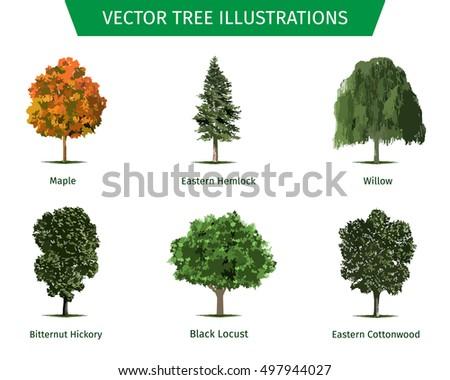 Cottonwood Leaf Type
