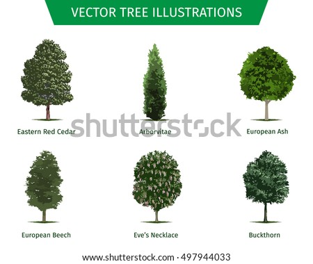 Images Of Names Of Trees