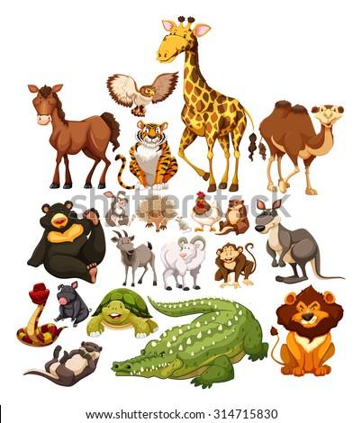 Different type of wild animals illustration - stock vector