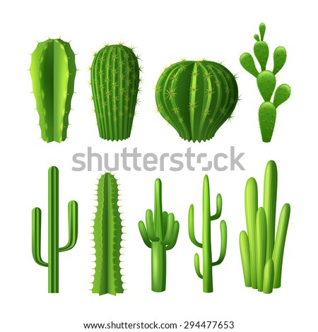 Different types cactus plants realistic decorative stock for Different types of succulent plants