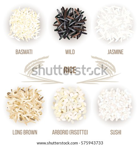 Different types of rice grains isolated on white background. Basmati, wild, jasmine, long brown, arborio, sushi. Vector illustration. For culinary, shop, restaurant. Can be used as tag, label, poster