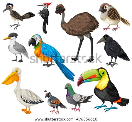 Tropical parrot set colored feathers wings stock vector for Birdhouse types