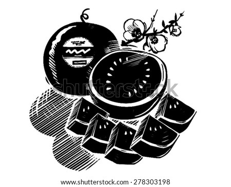 Digital engraving - black and white vector - line drawing -  japanese black watermelon