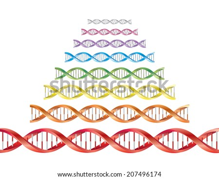 DNA - stock vector
