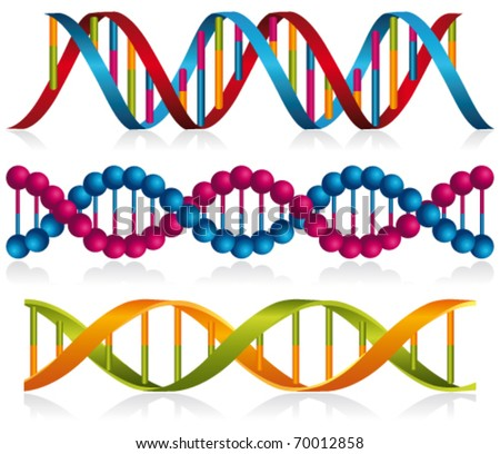 Dna strands. Vector - stock vector