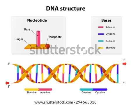 nucleotide stock photos royaltyfree images amp vectors