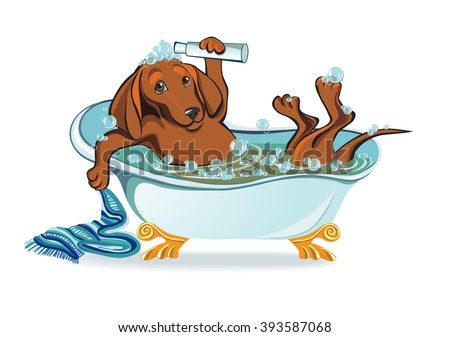 dog bathing, dachshund lying in the bath with bubbles - stock vector