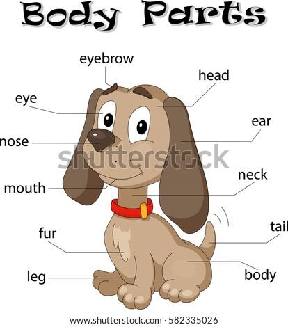 stock vector dog body parts animal anatomy in english 582335026