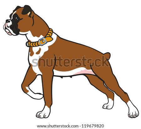 dog,boxer breed,vector picture isolated on white background,standing pose,side view image
