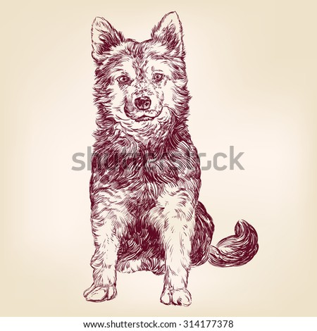 dog hand drawn vector llustration realistic sketch