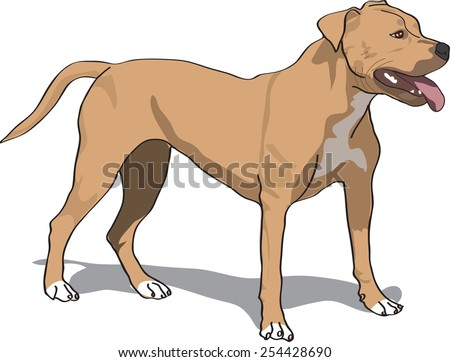 Dog illustration - brown pit bull standing up