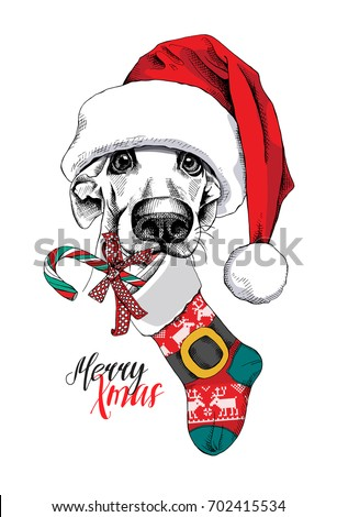 Dog in a big Santa's cap with a Christmas sock. Vector illustration.