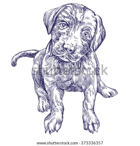 dog puppy hand drawn vector llustration realistic sketch