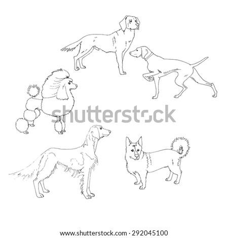 dog vector - stock vector