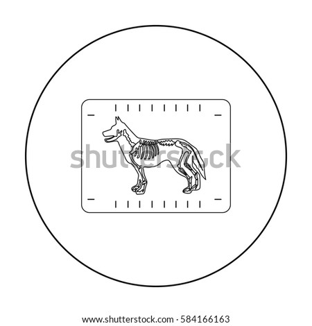 Dog Sitter Stock Photos Royalty Free Images Amp Vectors