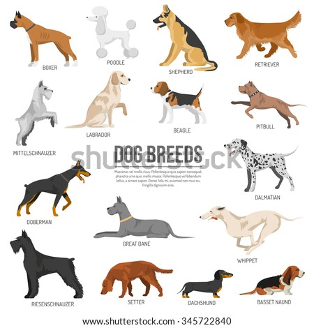 Dogs breed set with bull terrier boxer poodle isolated vector illustration - stock vector