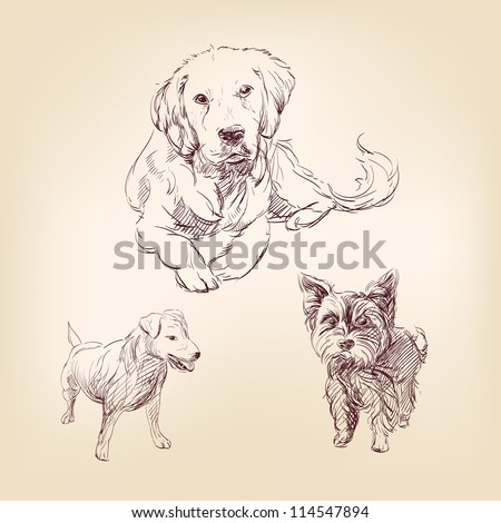 dogs -  set hand drawn  vector illustration  isolated - stock vector