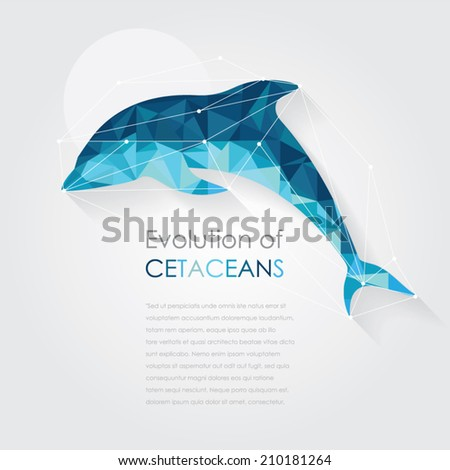 dolphin anatomy vector illustration in low poly art style - stock vector