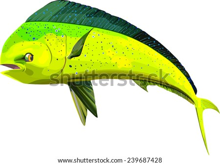 Dolphin fish stock images royalty free images vectors for Is a dolphin a fish